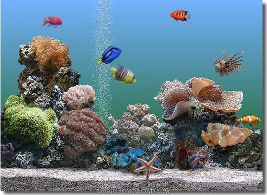 marine aquarium wallpaper. Marine Aquarium 3 3.0 Download - The Ultimate Virtual Saltwater Aquarium