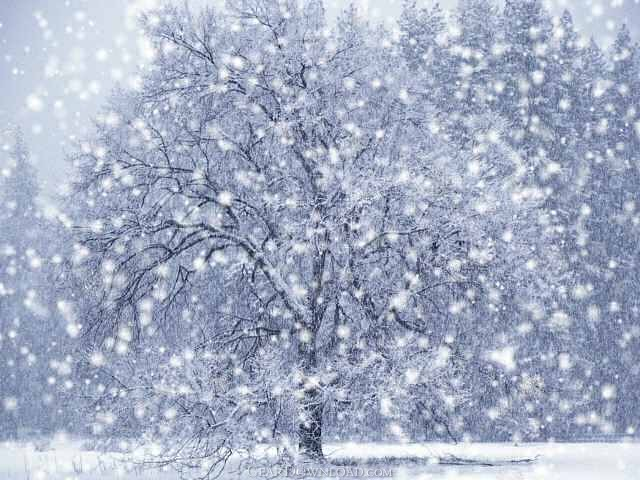 Dx winter snow screensaver 1 0 0 free download - Free screensavers snowflakes falling ...