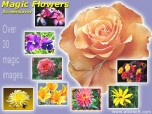 Magic Flowers Screensaver Screenshot