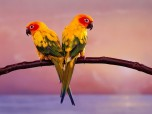 Parrots Free Screensaver