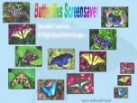Butterflies Screensaver Screenshot