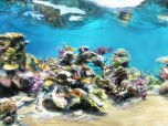 Sim Aquarium FREE! Screenshot