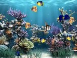 Screensaver Maker: Aquarium Screenshot
