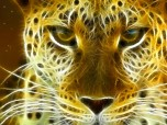 Wild Felines Screensaver